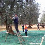 Produttori di olio di oliva del Salento
