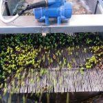 Lavaggio olive in frantoio
