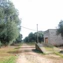 "Foto campagna olivetata in tenuta ""Cordadilana"""
