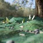 Olivagione 2017/2018, la raccolta delle olive in Puglia