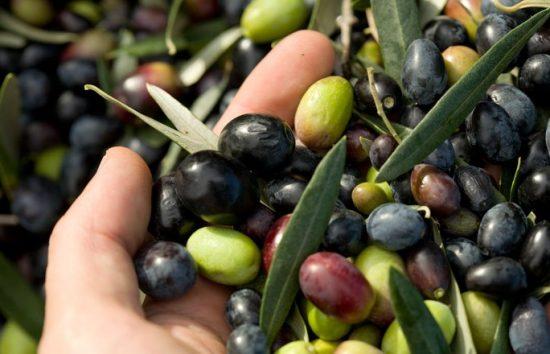 Il colore delle olive in base alla varietà