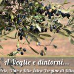 A Veglie dove trovare olio extravergine di oliva del Salento