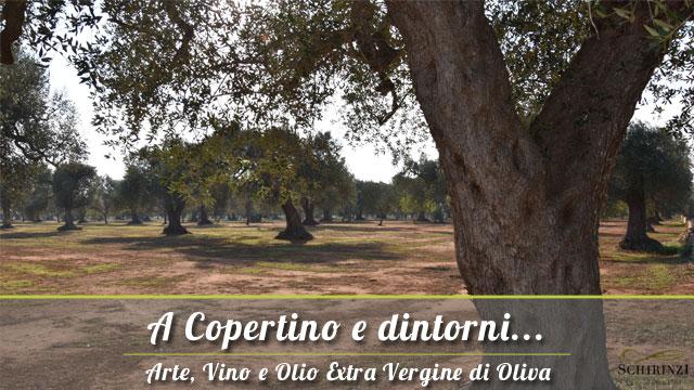 A Copertino vendita olio extravergine di oliva del Salento