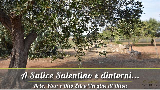 Vendita Olio Extravergine di Oliva a Salice Salentino nel Salento