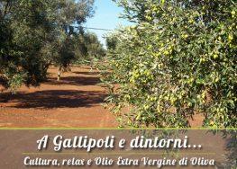 A Gallipoli e dintorni: Vendita Olio Extravergine del Salento