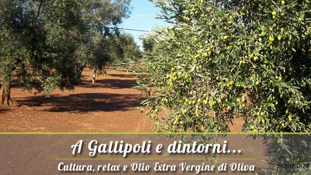 A Gallipoli vendita olio extravergine di oliva del Salento