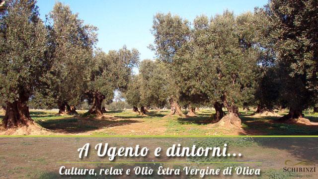 A Ugento la vendita olio extravergine di oliva del Salento