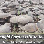 Vendita online funghi Cardoncelli sottolio del Salento pugliesi