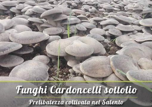 Funghi Cardoncelli del Salento sottolio, ecco dove acquistarli