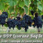 Vendita vino del Salento DOP Leverano confezioni bag in box