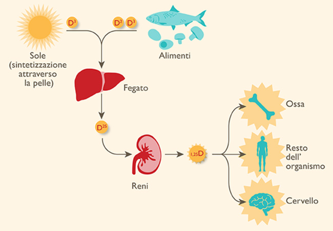 Processo di assorbimento vitamina D con i grassi e olio extravergine