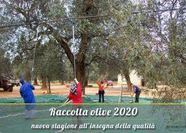 Raccolta olive 2020: al via la nuova stagione all'insegna della qualità
